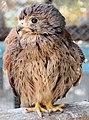 Simferopol zoo - bird2.jpg