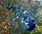 Singur Landsat 8 OLI 20171102 cc431.png