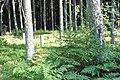 Skangaļu vācu karavīru brāļu kapi (WWI), Valgundes pagasts, Jelgavas novads, Latvia - panoramio (3).jpg