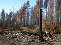 Skogsbranden i Västmanland 2014 - Brandområde utmed U668 mellan Hästbäck och Stabäck - 5536.jpg