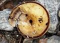 Snail (44908648784).jpg