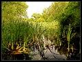 Sobědruhy - panoramio.jpg
