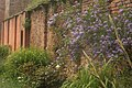 Solanum by the Orangery Garden Wall.jpg