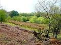 Some rough grazing near Cefn-y-bwlch - geograph.org.uk - 1288447.jpg