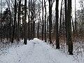 Spaziergang im verscheiten Siebentischwald - panoramio.jpg