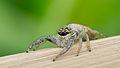 Spider 01 (MK).jpg