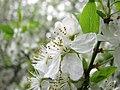 Spring 2008 - Cluj-Napoca (2408346740).jpg