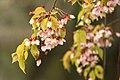 Spring in London (7116651269).jpg