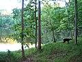 Springfield, VA, USA - panoramio - Idawriter.jpg