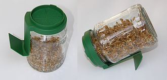 Germination - Germination glass (glass sprouter jar) with a plastic sieve-lid