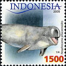 0c0882d189a5 Finless porpoise - Wikipedia