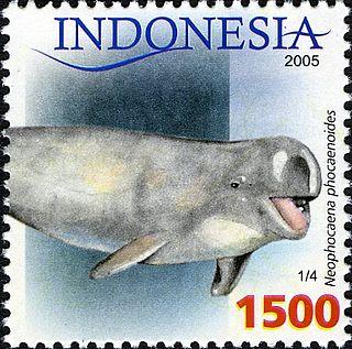 Finless porpoise species of porpoise