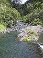 Starr-040713-0113-Eucalyptus sp-view stream-Kopiliula-Maui (24346830879).jpg