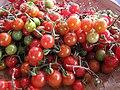 Starr-120606-7049-Solanum lycopersicum-fruit-Laulima Farm Kipahulu-Maui (24849069870).jpg