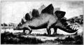 Stegosaurus ungulatus Roberts 1901.png
