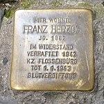 Stolpersteine Regensburg Herzog.jpg