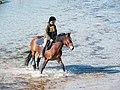 Strandgalopprennen, Wustrow (P1080212).jpg