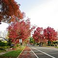Street in autumn - Salem, Oregon.JPG