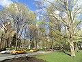 Streets in Central Park - DSC05932.JPG