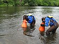 Students searching for mussels (5754768422).jpg