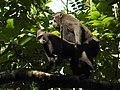 Sulawesi trsr DSCN0393 v1.JPG