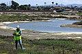 Surveying for salt marsh bird's beak (34003988332).jpg