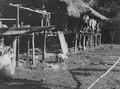 Svinidyll vid medicinmannen Selimos hus. Nr. Neg. 000826, SK 003453. Darién, Sambú River. Panama - SMVK - 004115.tif