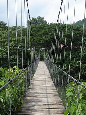 Thenmala - Suspension Bridge