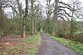 Swithland Wood, Leicestershire - geograph.org.uk - 155022.jpg