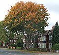 Sycamore Tree, Ferry Road, Scunthorpe - geograph.org.uk - 582629.jpg