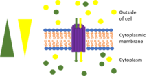 Membrane transport protein