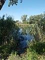 Tó nádassal és a HÉV híd, 2019 Dunaharaszti.jpg