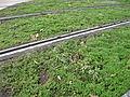 T2 vegetation.jpg