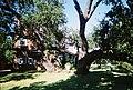 Tampa FL Hyde Park Hist Dist04.jpg
