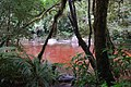 Tannin-colored water of Oparara River.jpg