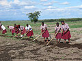 Tanzanian students tending school crops.jpg