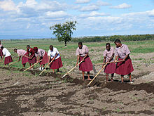 Students Tending School Crops