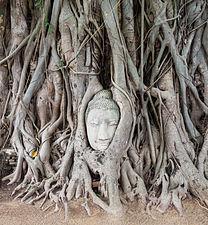 Templo Mahathat, Ayutthaya, Tailandia, 2013-08-23, DD 04.jpg