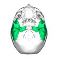 Temporal bone inferior2.png
