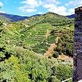 Terrazzamenti Monterosso .jpg