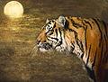 Textured Tiger (9455660144).jpg
