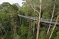 The 30m high structure of The Treetop Walk (19199660009).jpg