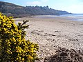 The Beach, Sandyhills Bay - geograph.org.uk - 398781.jpg