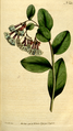 The Botanical Magazine, Plate 160 (Volume 5, 1792).png