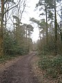 The Greensand Way in Limpsfield Chart - geograph.org.uk - 1755767.jpg