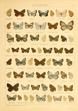 The Macrolepidoptera of the world (Taf. 82) (8145302922).jpg