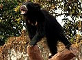 The Power of Sloth Bear.jpg