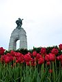 The Response, National War Memorial and the red tulips.jpg