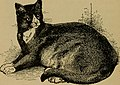 The cat, a guide to the classification and varieties of cats and a short treaties upon their care, diseases, and treatment (1895) (20586204075).jpg