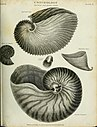 The cyclopaedia; or, Universal dictionary of arts, sciences, and literature. Plates (1820) (20633932638).jpg